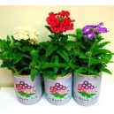 Promo Can Plants