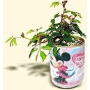 Promotional Can Plant